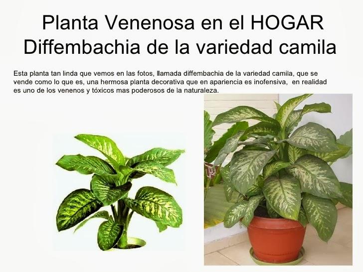 Plantas de interior venenosas - Plantas venenosas de interior ...