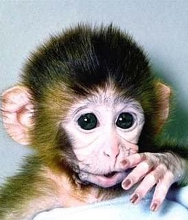 coretancartun2 Monyet Lucu