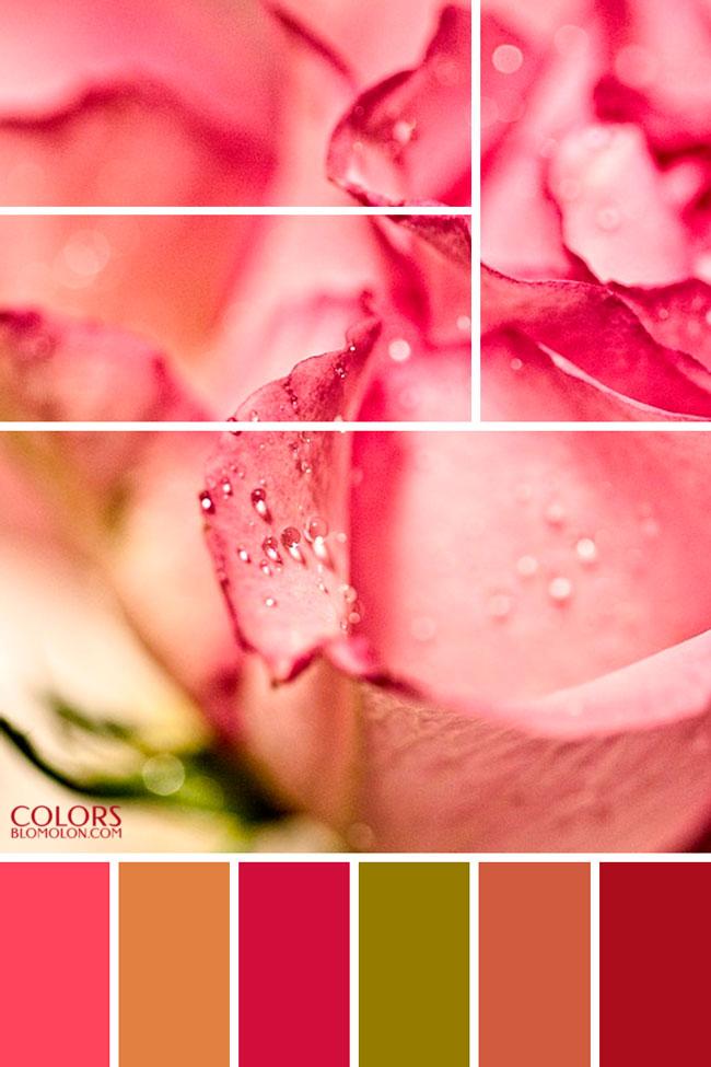 plantilla_base_paletas_de_colores_4