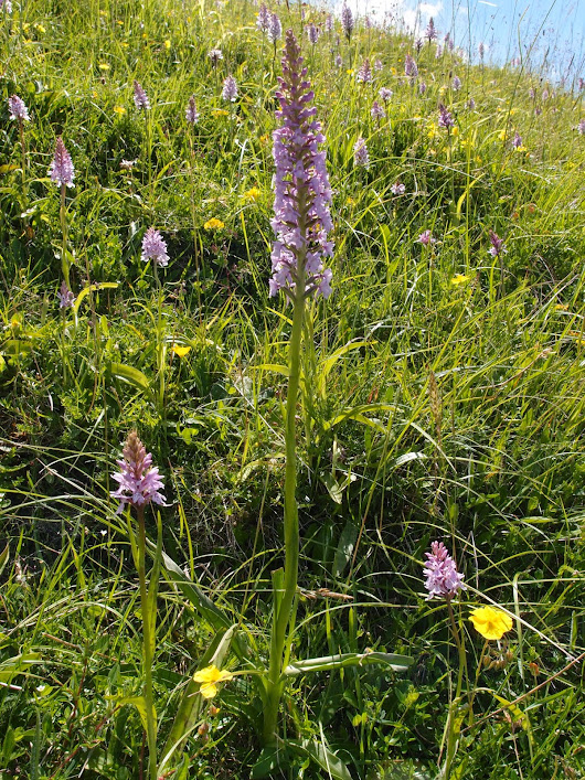 Bedfordshire Orchid Group