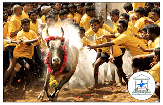 Jallikattu - The Pride of Tamil Culture: Jallikattu (or Sallikkattu), also known as Eru thazhuvuthal and Manju virattu, is a traditional sport in which a Bos indicus bull, commonly of the Kangayam breed, is released into a crowd of people. Multiple human participants attempt to grab the large hump of the bull with both arms and hang on to it while the bull attempts to escape. Participants hold the hump for as long as possible, attempting to bring the bull to a stop. In some cases, participants must ride long enough to remove flags on the bull's horns. History: Jallikattu has been known to be practiced during the Tamil classical period (400-100 BC). It was common among the ancient people Aayars who lived in the 'Mullai' geographical division of the ancient Tamil country. Later, it became a platform for display of bravery and prize money was introduced for participation encouragement. A seal from the Indus Valley Civilization depicting the practice is preserved in the National Museum, New Delhi. A cave painting in white kaolin discovered near Madurai depicting a lone man trying to control a bull is estimated to be about 2,500 years old. The Animal Welfare Board of India filed a case in the Supreme Court of India for an outright ban on Jallikattu because of the cruelty to animals and the threat to public safety involved. Ban on Jallikattu: On 27 November 2010, the Supreme Court permitted the Government of Tamil Nadu to allow Jallikattu for five months in a year and directed the District Collectors to make sure that the animals that participate in Jallikattu are registered to the Animal Welfare Board and in return the Board would send its representative to monitor the event. The Ministry of Environment and Forests issued a notification in 2011 that banned the use of bulls as performing animals, thereby banning the event But the practice continued to be held under Tamil Nadu Regulation of Jallikattu Act No 27 of 2009. On 7 May 2014, the Supreme Court of India struck down the state law and banned Jallikattu altogether. The Supreme Court noted that any flouting of the ban should result in penalties for cruelty to animals under The Prevention of Cruelty to Animals Act, 1960. The court also asked the Government of India to amend the law on preventing cruelty to animals to bring bulls within its ambit. In May 2014, the Supreme Court of India banned the practice, citing animal welfare issues. On 8 January 2016, the Government of India passed an order exempting Jallikattu from all performances where bulls can not be used, effectively reversing the ban. However, on 14 January 2016, the Supreme Court of India upheld its ban on the event, leading to protests all over Tamil Nadu. Protest against Ban: Last year, on 8 January 2016, the Ministry of Environment and Forests permitted the continuation of the tradition under certain conditions, effectively ending the ban; however, this was overturned by the Supreme Court on 26 July. On 16 January 2016, the World Youth Organization (WYO) protested at Chennai against the stay on ban on conducting Jallikattu in Tamil Nadu. The WYO also demanded a ban on PETA in India. On 8 January 2017, some anonymous groups conducted a well organized rally at Chennai Marina opposing the ban on Jallikattu. The participants walked from the lighthouse to labour statue bearing posters saying 'save Jallikattu'. It is reported that there were hundreds of participants in the rally. Given the well-planned nature nature of the agitations its vivid that several Christian NGOs are involved in fueling the agitation among the public. Intelligence officials had concluded that the Church, NGOs and various evangelist organisations and even Islamic organizations are funding and aiding this ban. few Churches openly conducted prayer mass and rally against the Supreme Court ruling. Following the protests at Chennai, many students started rallies in various towns of Tamil Nadu. After hearing the petitions which were led by the Animal Welfare Board of India challenging central government's notification, the Supreme Court of India on 12 January ordered a stay, issued notices to the central government and the government of Tamil Nadu and later refused to lift the stay. Numerous Jallikattu events were held across Tamil Nadu in protest of the ban, and hundreds of participants were detained by police in response. The Supreme Court has agreed to delay its verdict on Jallikattu for a week following the Centre's request that doing so would avoid unrest. The Attorney General Mukul Rahotgi informed the Supreme Court bench that the people of Tamil Nadu were
