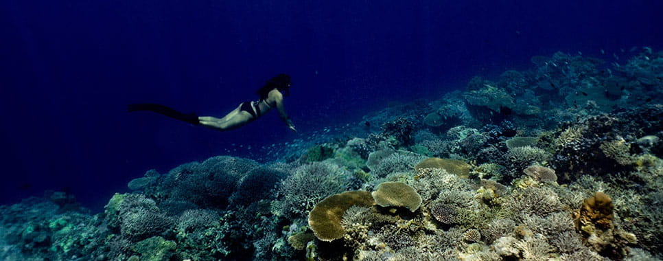 Travel Destination - Apo Reef, Bayan ng Sablayan, Philippines