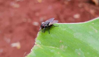 Kok Bisa Kekal dineraka karna seekor lalat