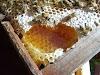 Μέθοδος θυμαριού Γκρεχ: Κάθε μελίσσι πάνω από 100 κιλά μέλι!!