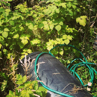 growing, gardening, life on pig row