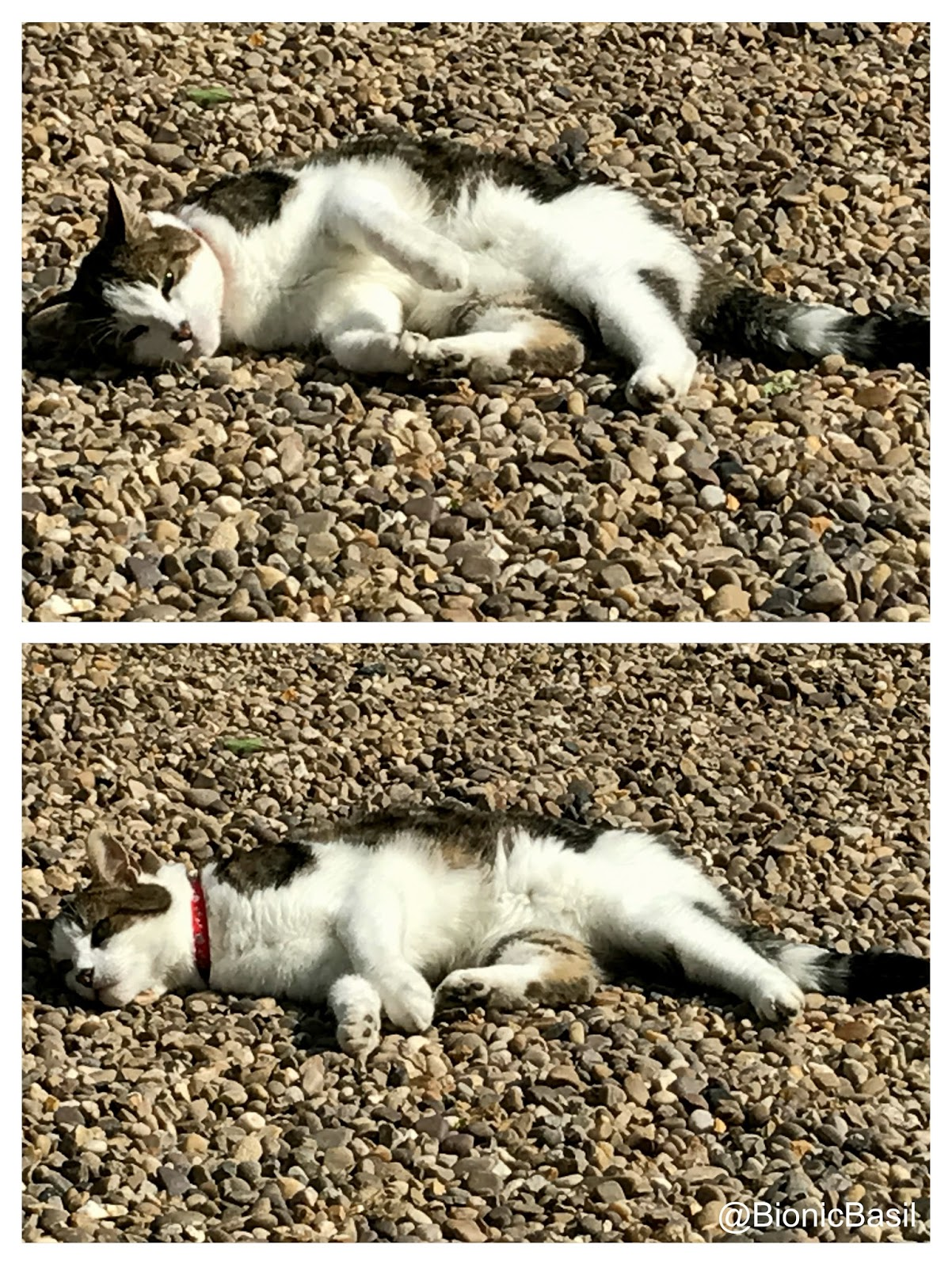 zen colouring cats : So This Week Be Like Me Find Some Sunshine And Just Flop Down As Mew Can See I Ve Got My Oms On And My Zen Harmonies Happening Big Time Mol
