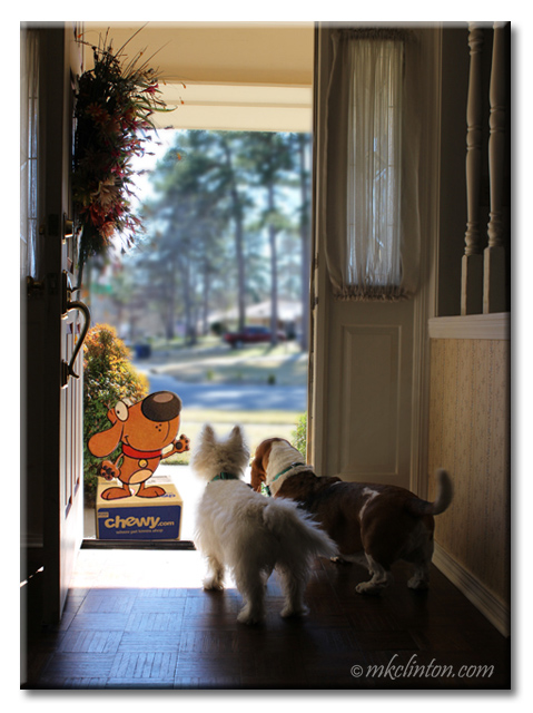 Chewy cartoon mascot standing at door with Basset and Westie