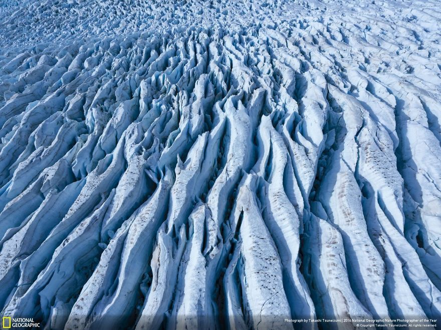 20+ Of The Best Entries From The 2016 National Geographic Nature Photographer Of The Year - The Glacier Pattern