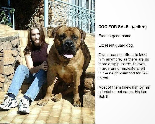 Funny Dog For Sale Advert Joke Picture