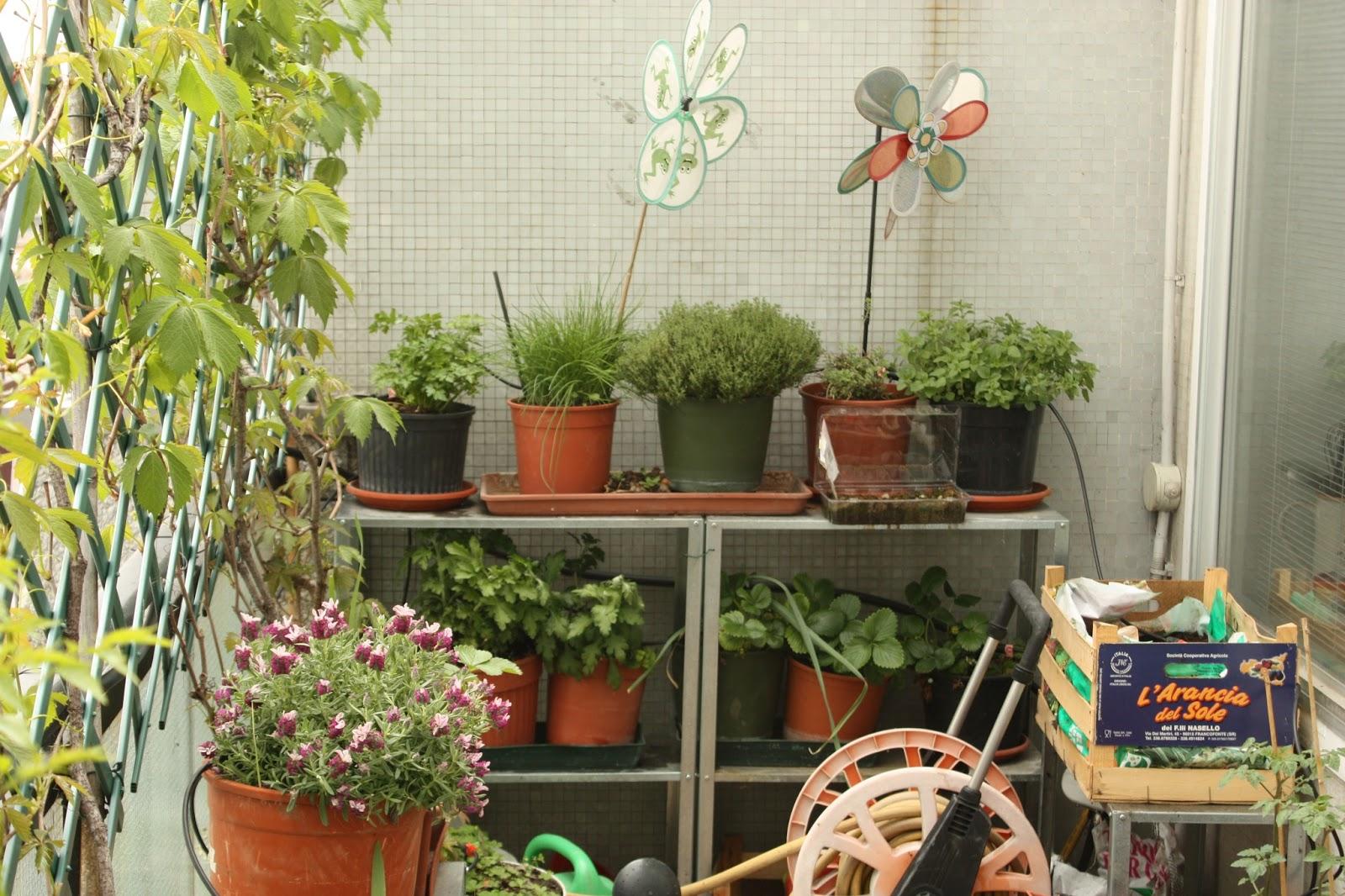 Coltivare pomodori in vaso il mio esperimento terrazzo for Piante pomodori in vaso
