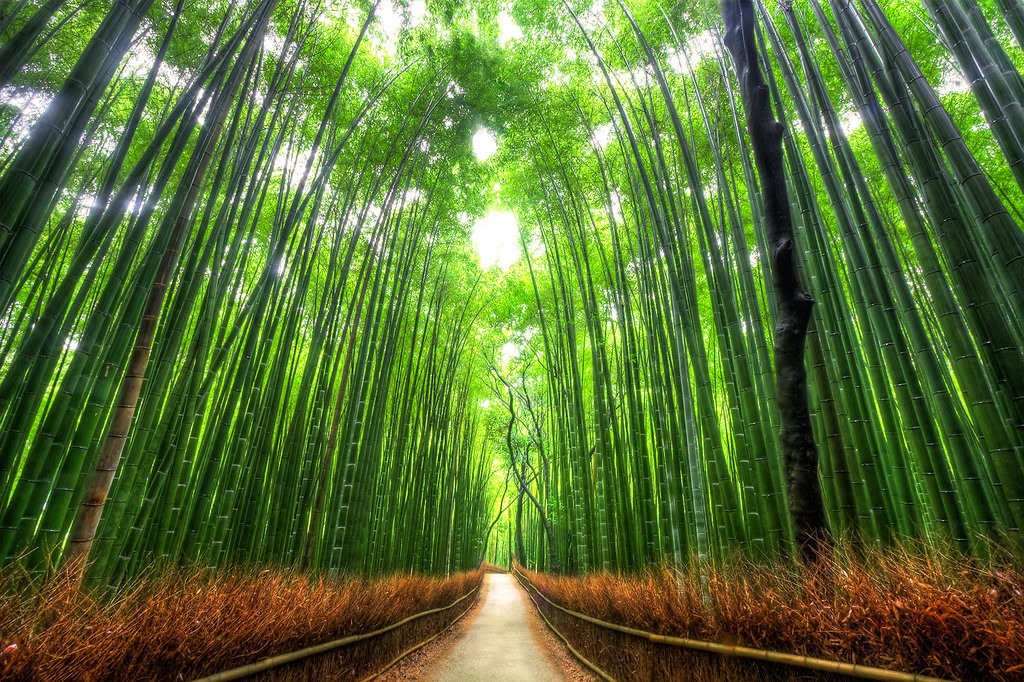 Bamboo forest, Kyoto