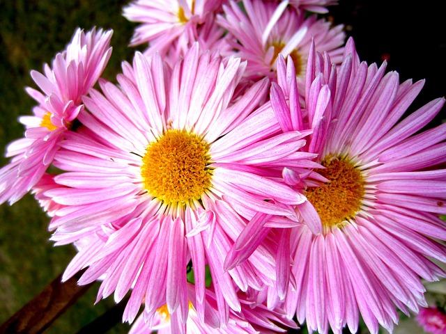 hoa thach thao dep