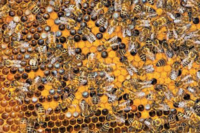 Μελισσοκομία - 7 βήματα για να γίνεις μελισσοκόμος.