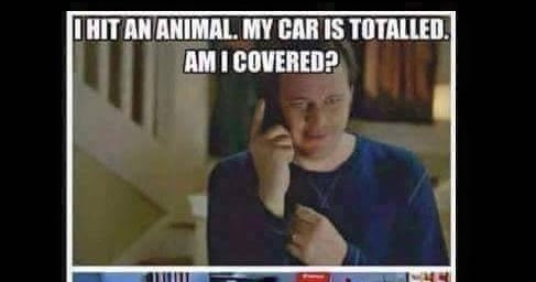 Just A Car Guy: I bet right now the insurance companies ...