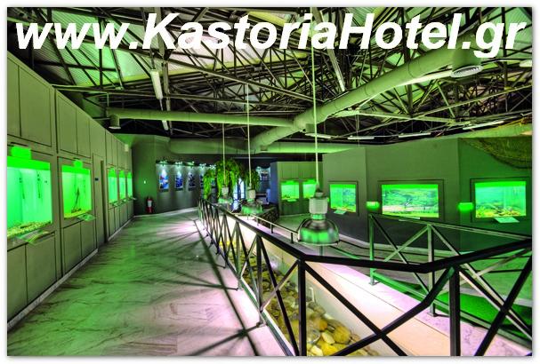 Το Ενυδρείο της ΚΑΣΤΟΡΙΑΣ - ξενοδοχειο στην καστορια