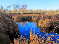 Beaver Pond, Riverfront Park, Billings, Montana