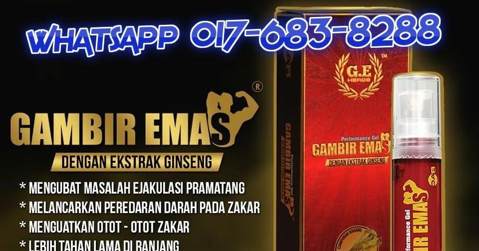 lucky store gel gambir emas ginseng besar panjang keras tahan lama 100 original with