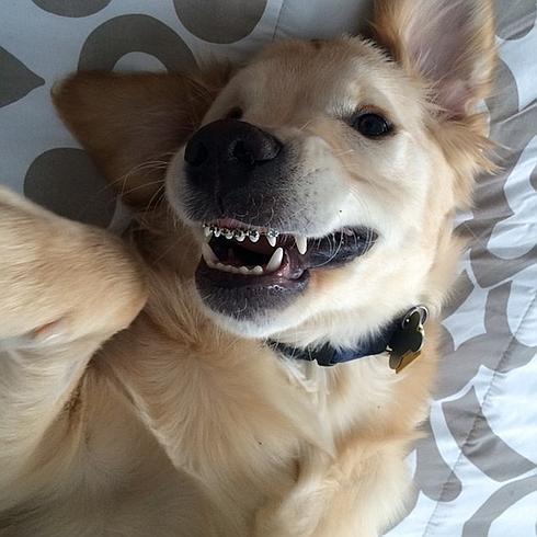 wesley perro aparato dental