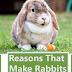 Reasons That Make Rabbits Great Pets