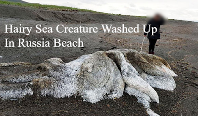 Russian creature washes up on the Pacific coast.