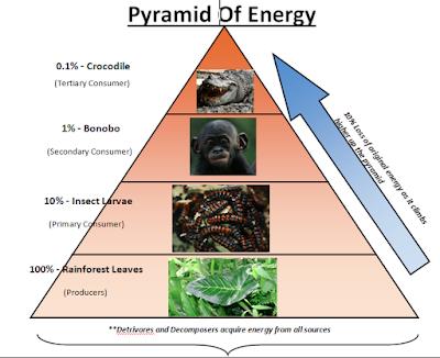 Tingkatan Piramida Energi Dalam Kehidupan