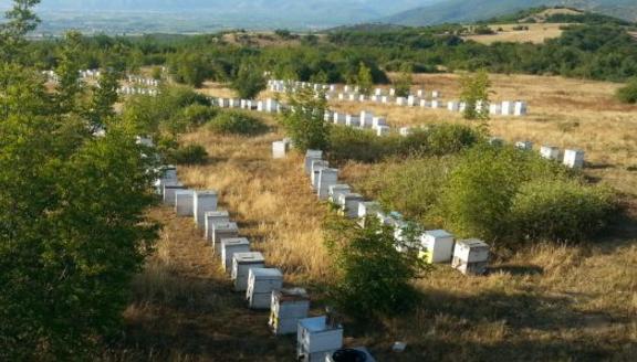 Νομαδική μελισσοκομία και μέθοδος παλιού μελισσοκόμου για πολλούς τρύγους!