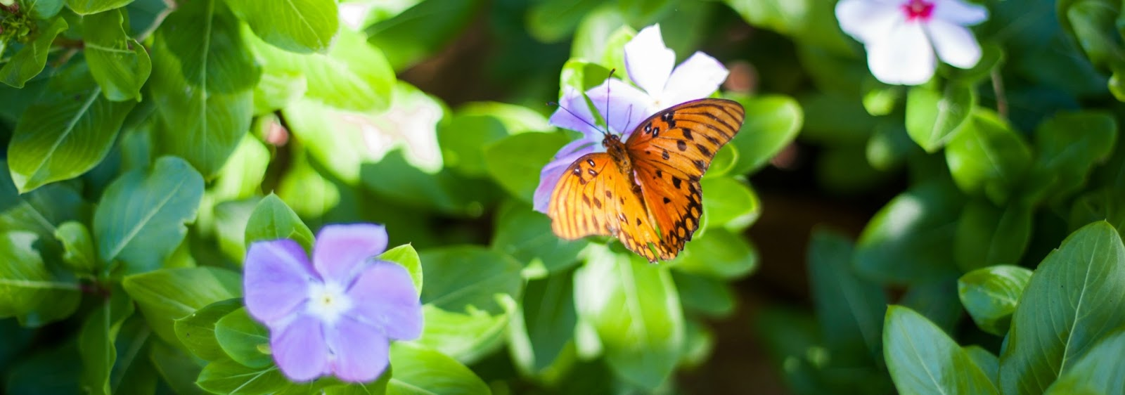 orange butterfly on a purple flower surrounded by green leaves