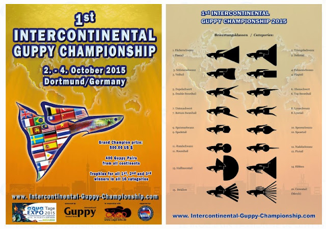 premier-championnat-intercontinental-de-guppy-2015