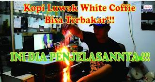 kandungan luwak white coffee