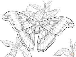 Best butterfly Image And Photo Coloring Pages