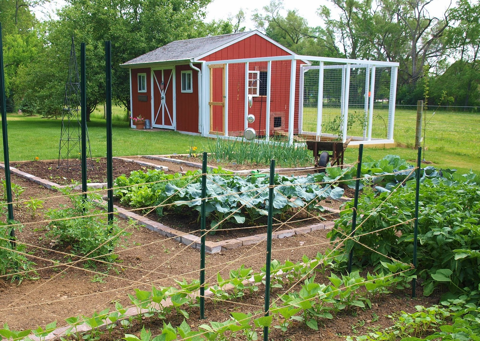 ohio thoughts~: building a chicken coop