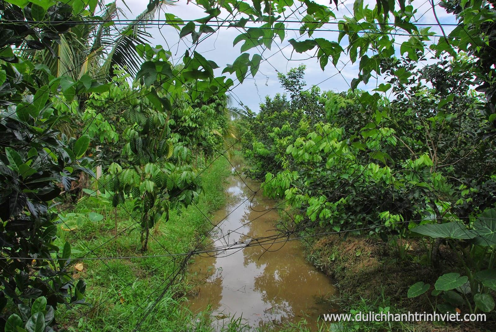 Du lịch vườn Mỹ Khánh, Cần Thơ