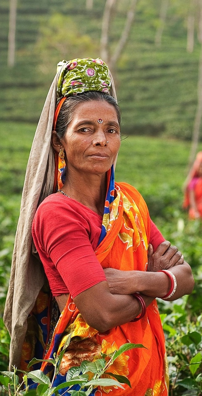 Woman tea leaf picker.