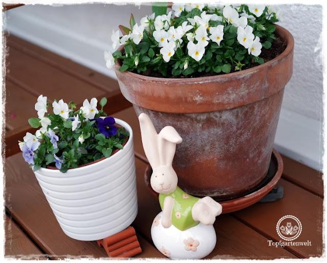 Gartenblog Topfgartenwelt Ostern: Hornveilchen mit Osterhasen