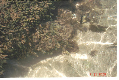 Piscinas Naturais de Pajuçara - Maceió - AL
