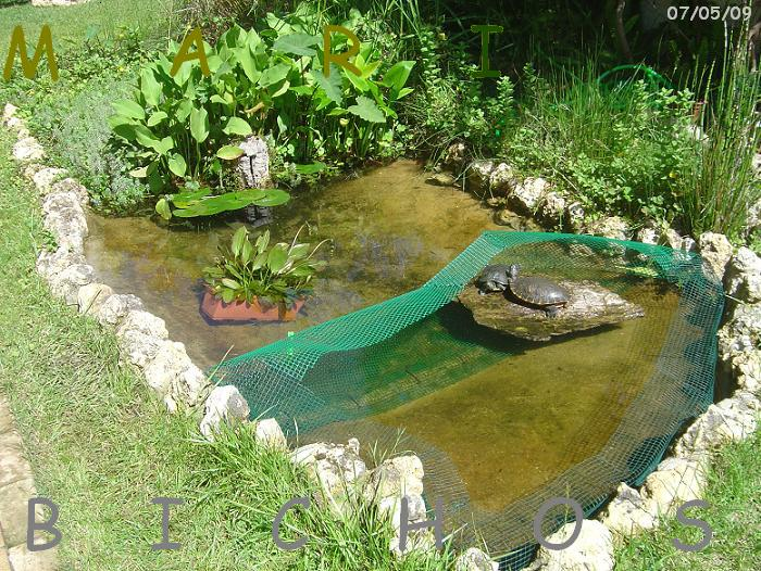 Un zoo en casa estanques con filtraci n natural para tortugas - Como construir un estanque para tortugas ...