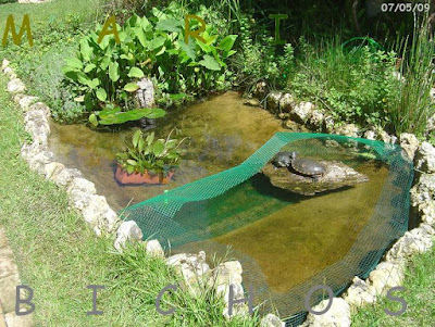 Tortugas en un estanque con filtración natural