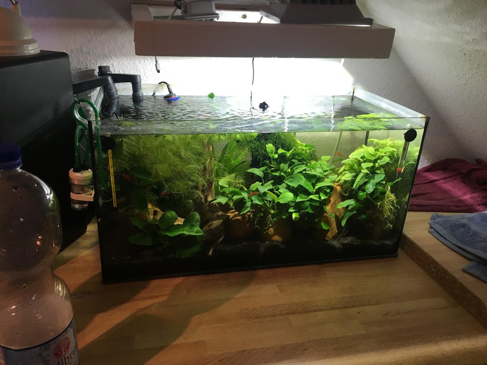meine aquarien mein 54 liter becken ohne algen abgebaut. Black Bedroom Furniture Sets. Home Design Ideas
