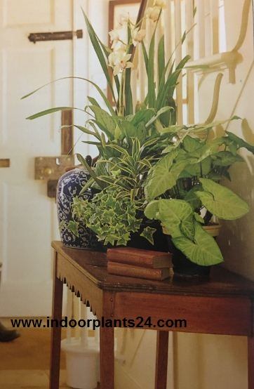 Indoor Plant Decoration Ideas Ultimate Guides