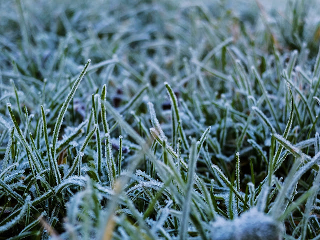 Close up photo of frost covered grass taken at ground level.