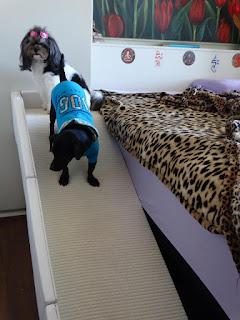 rampas para cães