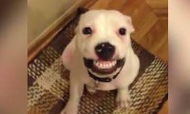 omorfos-kosmos.gr - Tο πιο viral... σκυλίσιο χαμόγελο (Βίντεο)
