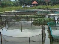 Kolam Jaring Sangat Bermanfaat Untuk Melakukan Budidaya Ikan