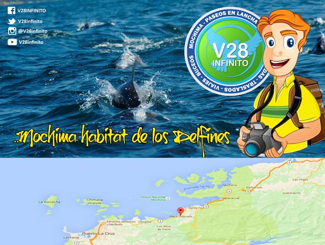 imagen mochima tour buscando los delfines