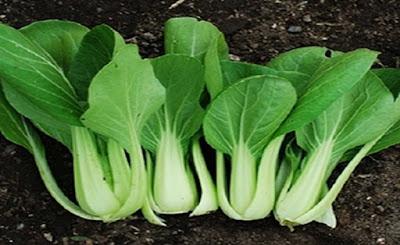 Petua Dapur Supaya Sayur Lebih Segar Dan Enak