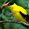 Cara Menjinakkan Burung Liar Hasil Tangkapan