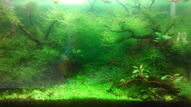 Alam Bawah Air Dalam Aquarium