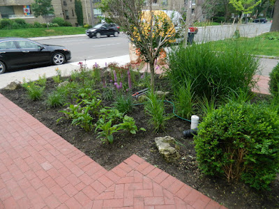 Avenue Road Toronto Front Garden Cleanup After by Paul Jung Gardening Services