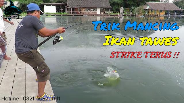 https://rajaessentsm.blogspot.com/2018/11/trik-mancing-ikan-tawes-strike-terus.html