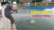 Trik Mancing Ikan Tawes Dijamin Strike Terus
